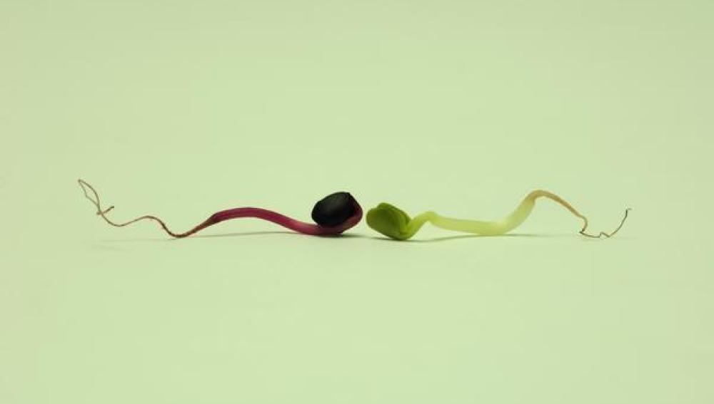 Recreación artística de dos espermatozoides.