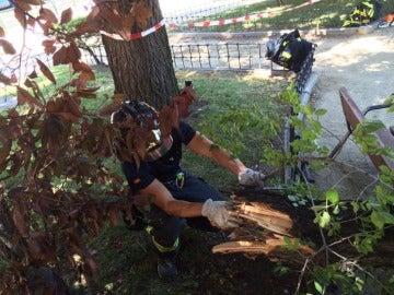 Un bombero retira la rama del árbol caída