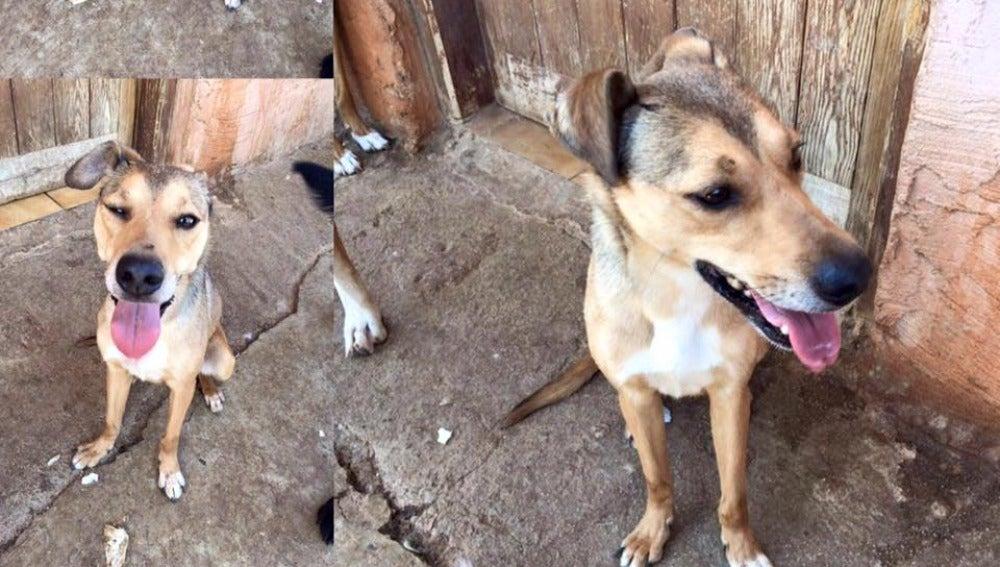 El perro de Polinyà sano y salvo