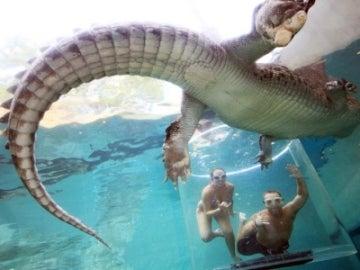 Buceando entre cocodrilos