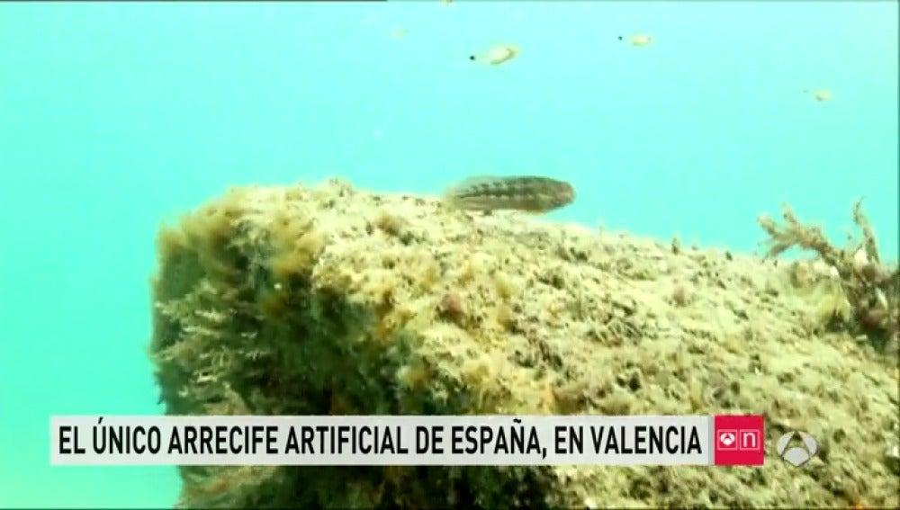 Arrecife artificial en Valencia