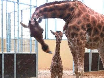 El nuevo habitante en el Zoo de Barcelona