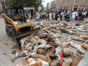 Cientos de perros envenenados en Paquistán