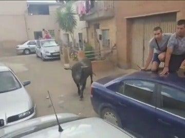 Frame 21.323629 de: Una niña de seis años, corneada por un novillo en un encierro en Zaragoza