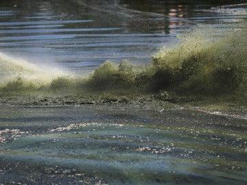 Una plaga de algas