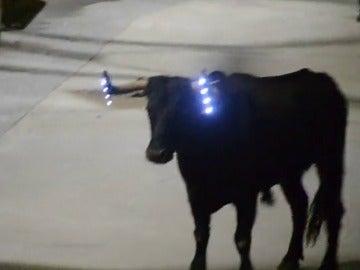 """Frame 16.109115 de: Un """"toro embolado"""" con luces led en los cuernos en vez de fuego en las fiestas de Los Fayos"""