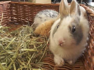 Un conejo en una cesta de mimbre