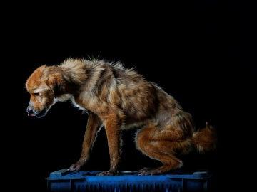 La China, uno de los perros albergados