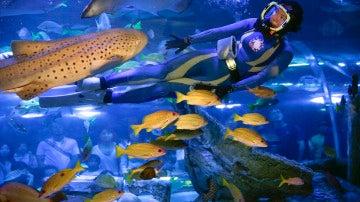 Entre peces (11-09-2016)