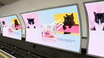 Tottenham Cat Road