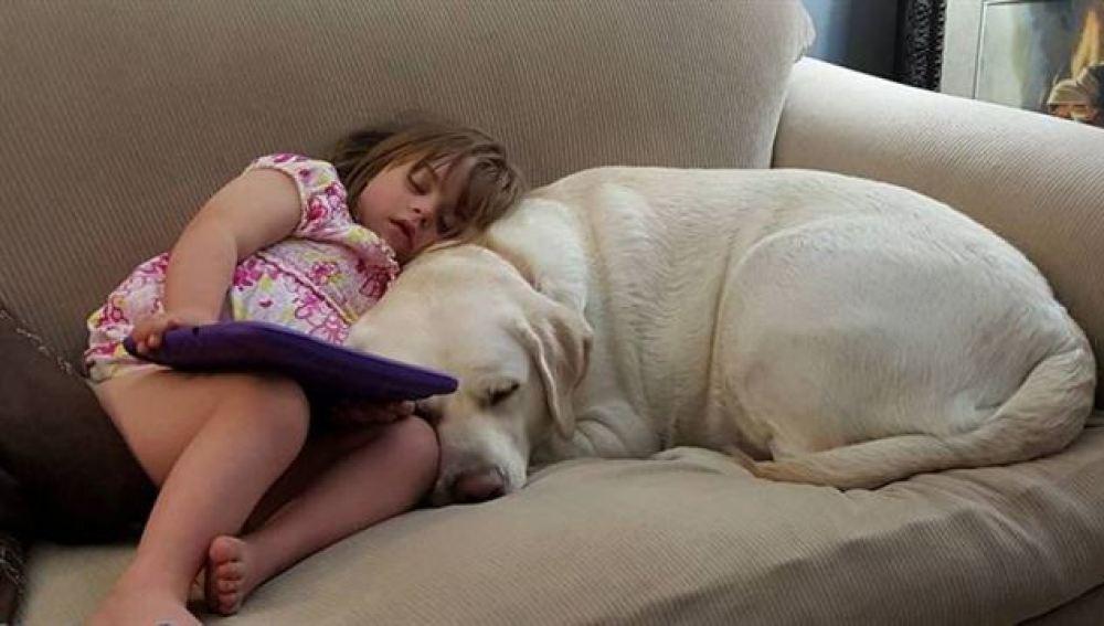 Este perro salva a una niña de 4 años de un coma diabético