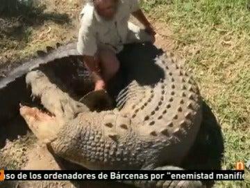 Frame 25.306508 de: Un dueño de un zoo australiano pierde la mano por el ataque de uno de sus cocodrilos ante la mirada de los visitantes