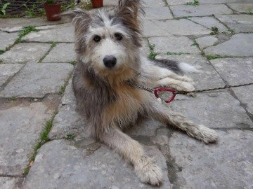 La perra perdida en Llanes
