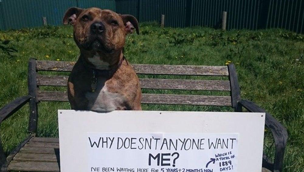 Esta imagen de Freya, 'la perrita más solitaria del mundo', se hizo viral