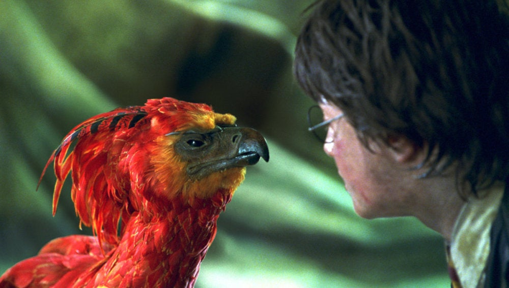 Harry Potter y Fawkes