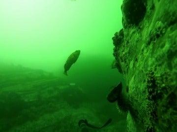 Frame 54.249317 de: Encuentran una Gopro  que permaneció un año en el fondo del mar