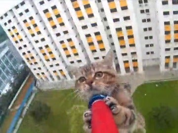 Frame 26.907427 de: Rescate de un gato que estaba en la cornisa del piso 12