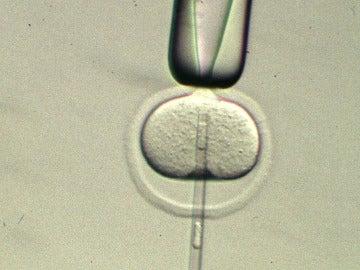 Vista del núcleo de un óvulo