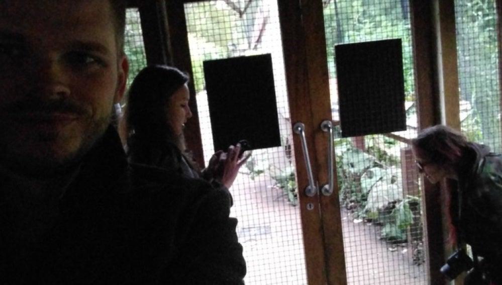 Varios visitantes escondidos tras escaparse un gorila del zoo