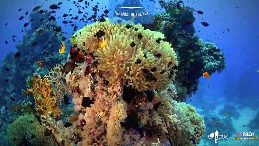 Frame 1.240939 de: Una aplicación desarrollada en España, nos muestra en 360 grados el fondo marino