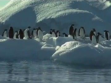 Frame 5.102031 de: Crean la mayor área protegida marina del mundo en el Océano Antártico