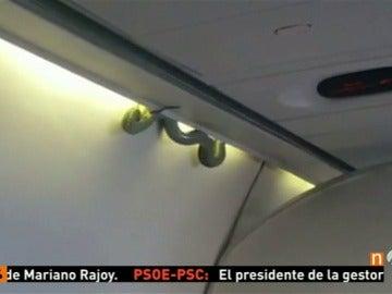 Hallan una serpiente en un avión