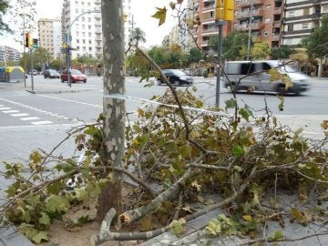 Una rama caída en Barcelona