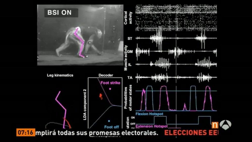 Resultado de imagen de mono vuelve a caminar gracias a chip