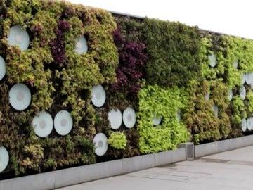 Frame 3.502131 de: La moda de los jardines verticales