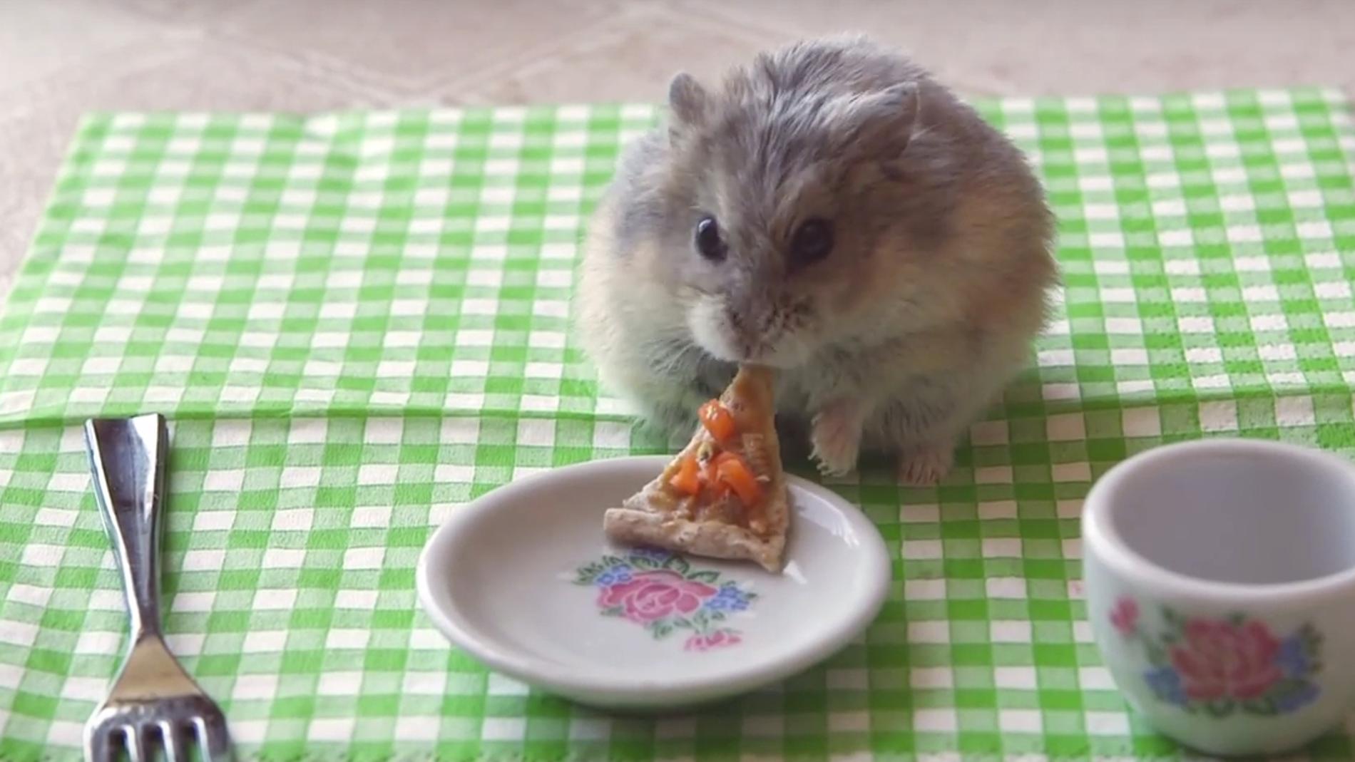 Nuestro amigo el hámster comiendo pizza.