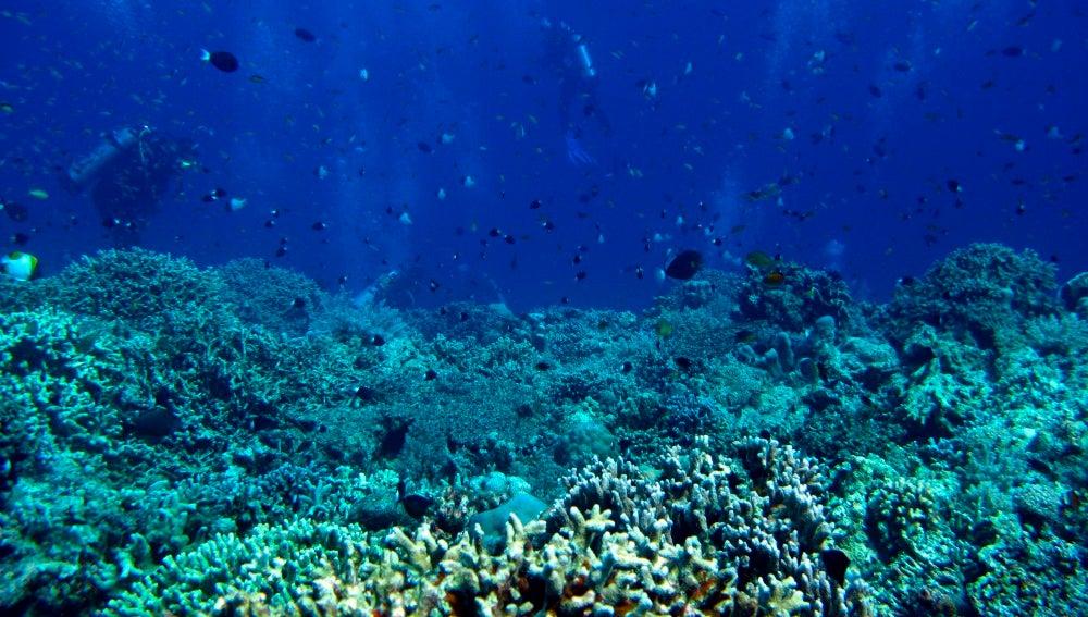 Científicos estudiando los corales del Caribe