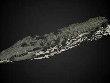 Tomografía de la cocodrilo madre con las crías dentro
