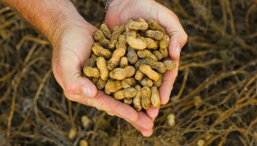 Un puñado de cacahuetes puede calentarnos.