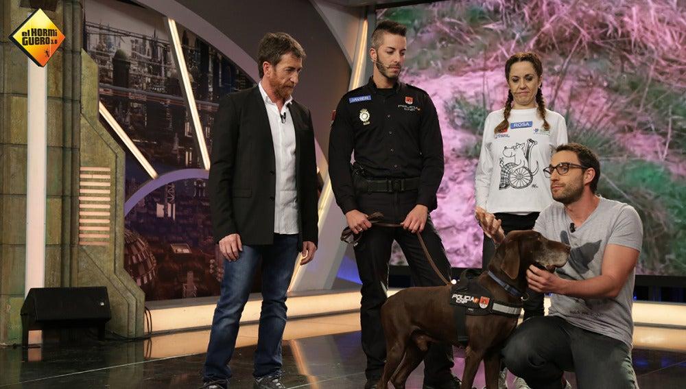 Adopta a Brus, el perro policía que se jubila tras años de servicio