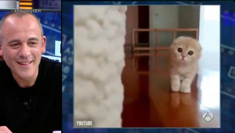 Frame 99.378353 de: Descubre el primer gato capaz de jugar al escondite inglés
