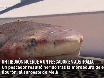 Frame 3.070754 de: Un tiburón hiere de gravedad a un pescador en Australia