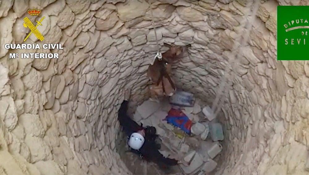 Rescate de tres galgos en un pozo de Osuna