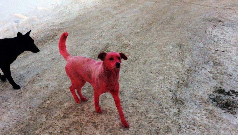 El tinte rosa provocó vómitos al perro