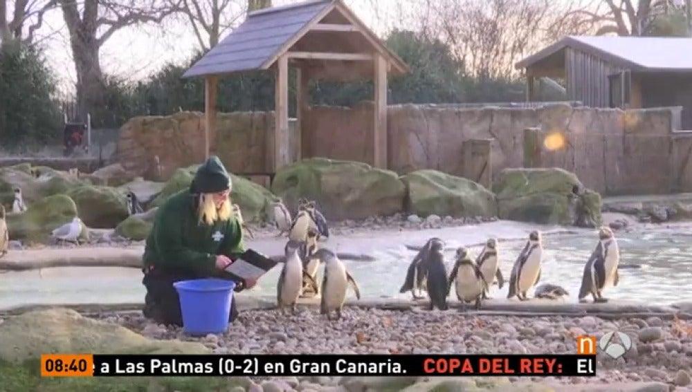 Frame 1.495555 de: En el Zoo de Londres comienza su conteo anual de animales