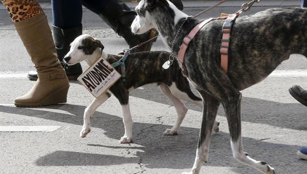Varios perros caminan por Madrid - Imagen de archivo