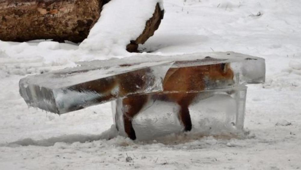 El zorro congelado