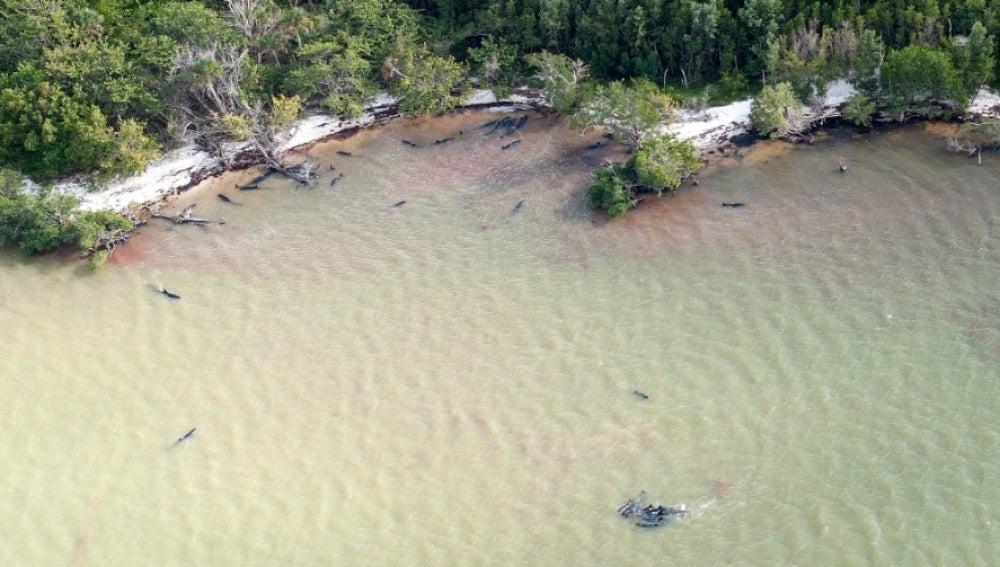 Al menos 82 delfines muertos en las costas de Florida