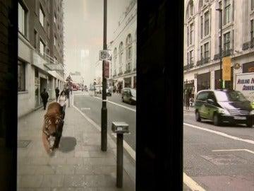 Frame 73.601687 de: Las marquesinas de los autobuses se convierten en plataformas de publicidad interactiva
