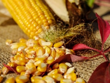 El maíz, de los vegetales que más engordan
