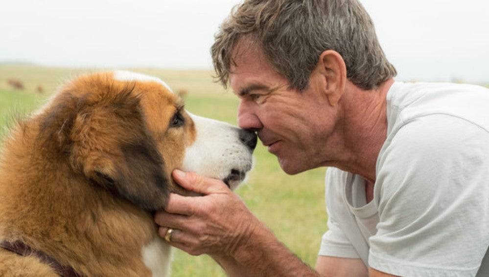 'A Dog's Purpose' se ha visto salpicada por un caso de maltrato animal