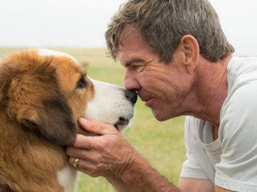 'A Dog's Purpose' se ha visto salpicada por un caso de maltrato animal