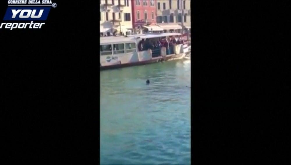 Frame 5.499263 de: Investigan un vídeo en el que se ve a un africano ahogándose en el Gran Canal de Venecia