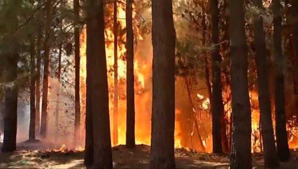 Frame 0.815281 de: El fuego arrasa casi 200.000 hectáreas en Chile