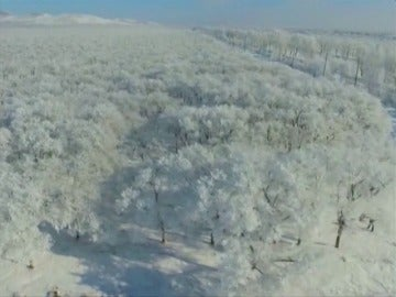 Frame 5.006808 de: Sorprendente paisaje de escarcha sobre los árboles en Mongolia
