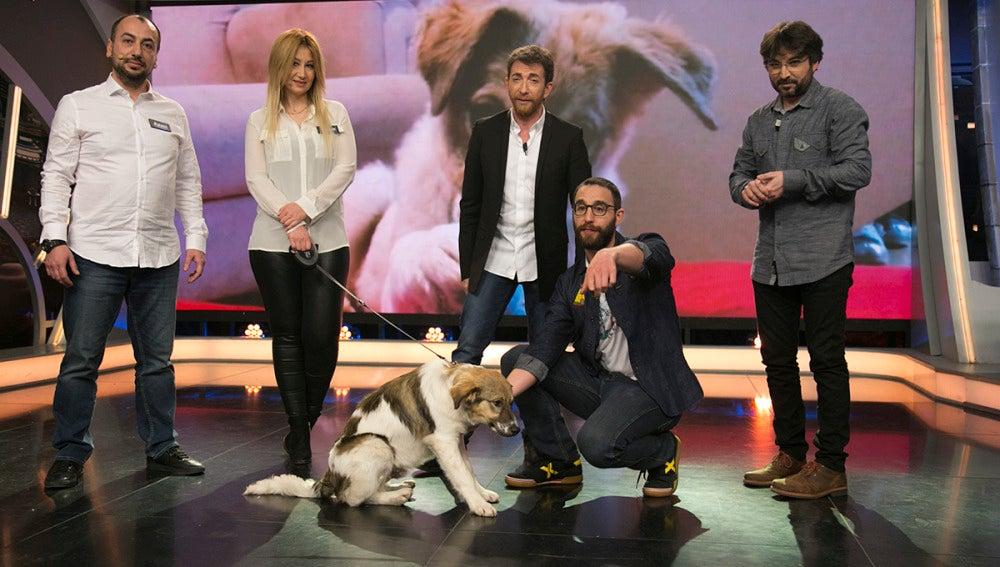 Adopta a Pascal, el perro que fue rociado con pegamento y barro